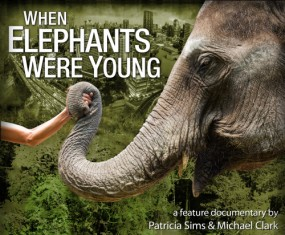 when elephants poster